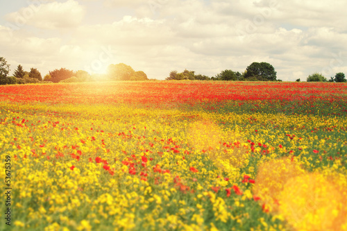 sunshine over poppies