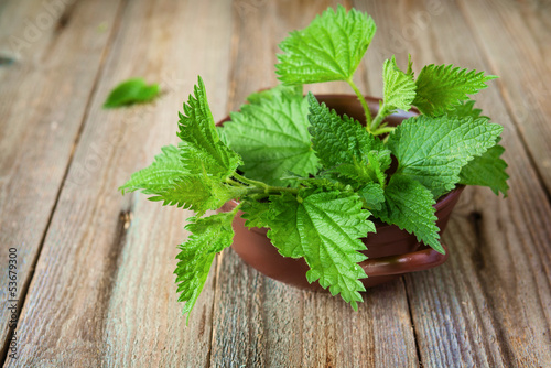 Nettle in bowl