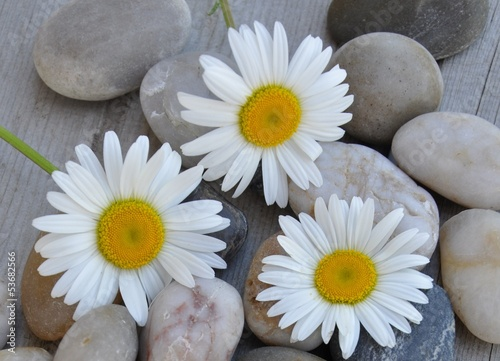 Three flowers over stones