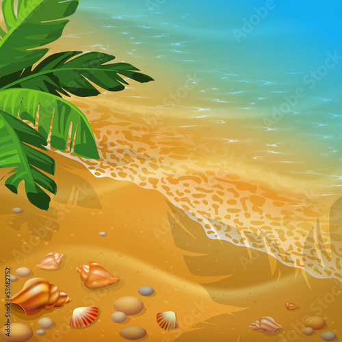 shells on the beach. Vector illustration.