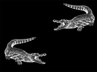 Crocodile on a black background.
