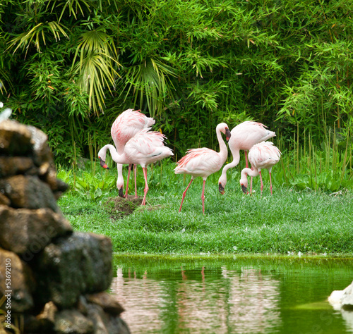 Beautiful pink flamingos