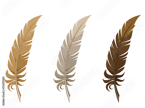 Set of three feathers. Vector illustration.