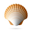Scallop seashell - 53701571