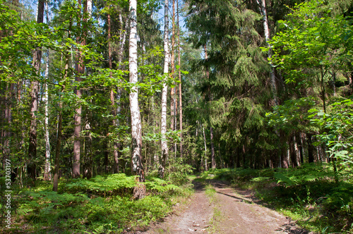 landscape of the road in the pine and birch forest