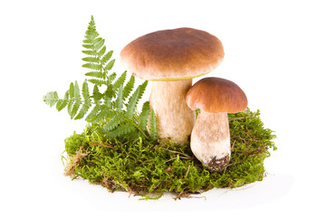 Mushrooms with moss