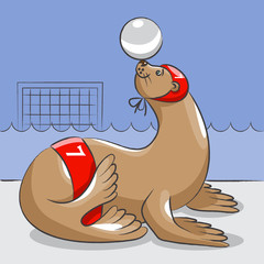 Seal - the water polo  player