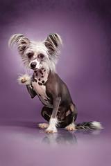 Nackthund Hallo