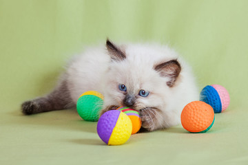 Baby cat closeup plays with colorful balls