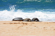 Three turtles in the sand just out of water under the sun