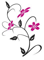 hibiskus-ranke