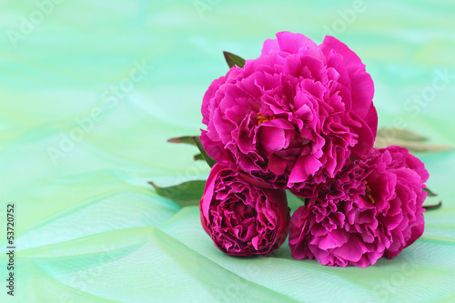 Peony roses on green background with copy space