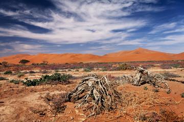 views of the vegetation in the desert