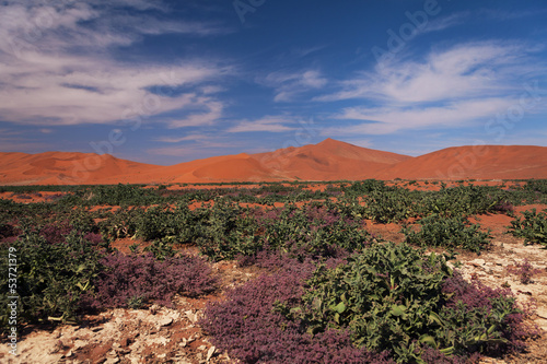 views of the vegetation in the desert