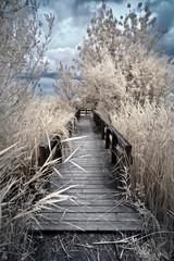 wooden boardwalk in infrared false color