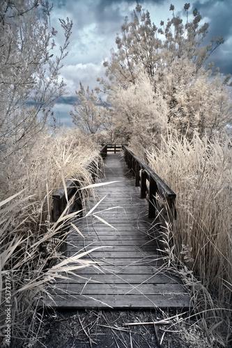 wooden boardwalk in infrared false color|53723764
