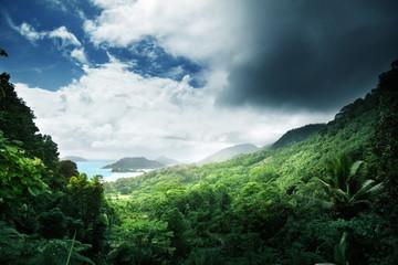 Dżungla na wyspie Seszele