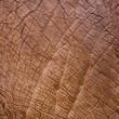 Elephant skin texture