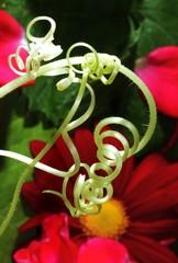 Spirale einer Pflanze