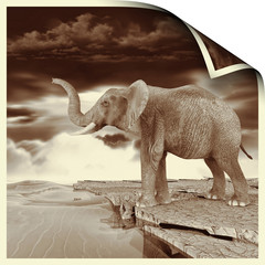 Elephant near the sea, antique effect