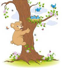 Jungbär klettert zum Vogelnest