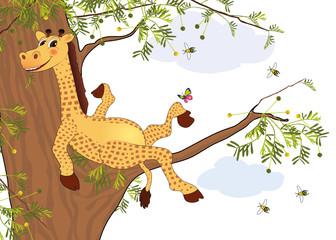 Giraffe ruht sich im Akazienaum auf