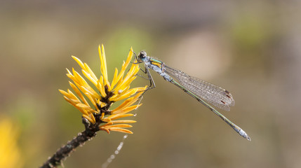 Dragonfly or damselfly on a plant
