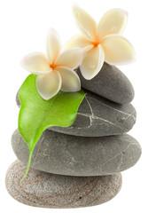 fleurs nacrées sur empilement de galets zen