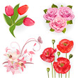 Set of isolated flowers for your design