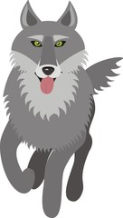 wolf, vector picture, front view, isolated on white background