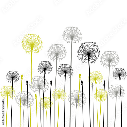 floral background, dandelion|53735905