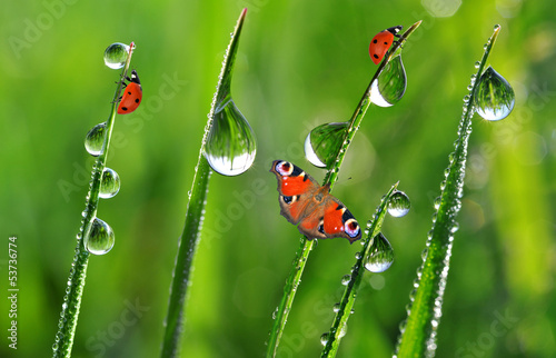 fresh morning dew with ladybirds and butterfly