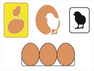 pollito y huevos