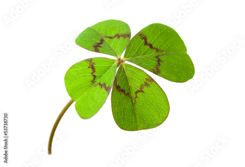 canvas print picture four-leafed clover