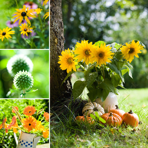 Herbstblumen Collage - Autumn flowers collage