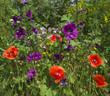 Wild flowers in a field in summer