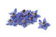 Heap of fresh borage flowers - 53742725