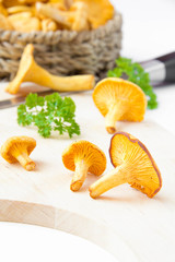 Fresh, raw golden chanterelles, autumn  harvest on desk
