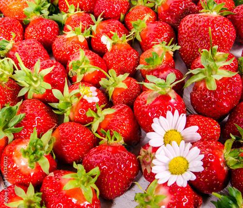Sommer-Genuss: Frisch gepflückte Erdbeeren