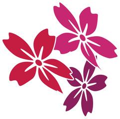 hibiskus-drei
