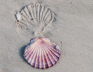Imprint and shell in sand.