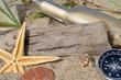 Treibholz mit Strandgut