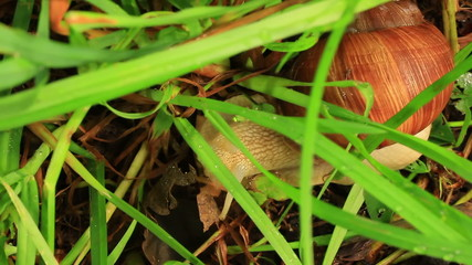 Snail on the earth under a grass. Close up