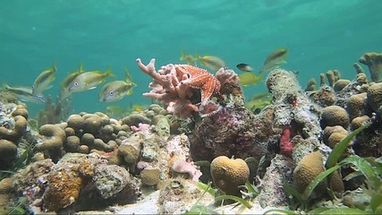 Marine life in a coral reef with water surface in background