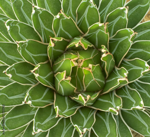 closeup of green plant agave