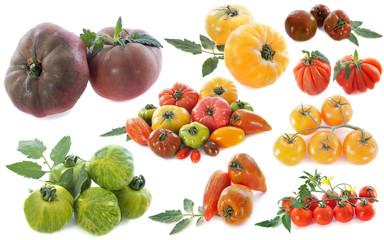 variétés anciennes de tomates