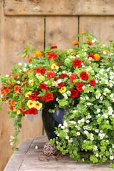 Sommerblumen im Kübel