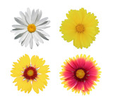 chamomile and gaillardia flowers
