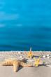 Strandurlaub, Souvenirs, Seesterne