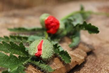 blumenstraus aus mohnblumen